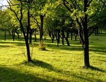 φως του ήλιου κήπων Στοκ Εικόνα