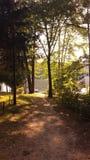 Φως του ήλιου μέσω των φύλλων δέντρων Στοκ Φωτογραφία