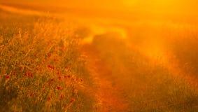 φως του ήλιου ξημερωμάτων Στοκ εικόνες με δικαίωμα ελεύθερης χρήσης