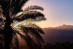 Φως του ήλιου που φωτίζει έναν φοίνικα στο ηλιοβασίλεμα, Παλμ Σπρινγκς, Καλιφόρνια στοκ εικόνα με δικαίωμα ελεύθερης χρήσης