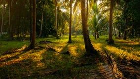 Φως του ήλιου πρωινού στο τροπικό δάσος στοκ φωτογραφία με δικαίωμα ελεύθερης χρήσης