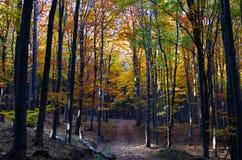 Φως του ήλιου στο δάσος φθινοπώρου στοκ φωτογραφία