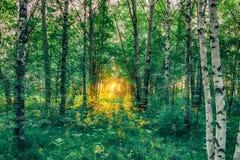 Φως του ήλιου στο πράσινο δάσος, άνοιξη Στοκ εικόνες με δικαίωμα ελεύθερης χρήσης