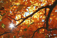 φως του ήλιου φυλλώματος πτώσης Στοκ εικόνες με δικαίωμα ελεύθερης χρήσης
