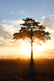 φως του ήλιου Στοκ φωτογραφίες με δικαίωμα ελεύθερης χρήσης