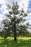 Φως του ήλιου μέσω ενός μεγάλου δέντρου στον κήπο στοκ φωτογραφία με δικαίωμα ελεύθερης χρήσης