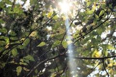 Φως του ήλιου μέσω των δέντρων Στοκ εικόνες με δικαίωμα ελεύθερης χρήσης