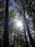 Φως του ήλιου μέσω των δέντρων Στοκ φωτογραφία με δικαίωμα ελεύθερης χρήσης