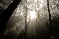 Φως του ήλιου μέσω των δασικών δέντρων Στοκ εικόνα με δικαίωμα ελεύθερης χρήσης