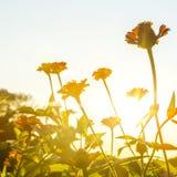 φως του ήλιου λουλο&upsilon Στοκ φωτογραφία με δικαίωμα ελεύθερης χρήσης
