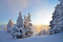 Φως του ήλιου πέρα από το δάσος το χειμώνα Στοκ φωτογραφία με δικαίωμα ελεύθερης χρήσης