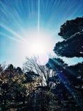 Φως του ήλιου που λάμπει πέρα από τα δέντρα πτώσης Στοκ εικόνα με δικαίωμα ελεύθερης χρήσης