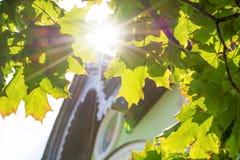 Φως του ήλιου που κοιτάζεται αδιάκριτα φωτεινό μέσω των φύλλων σφενδάμου στοκ φωτογραφία