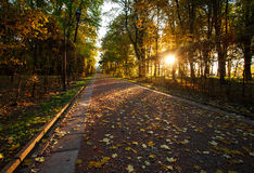 Φως του ήλιου ρύθμισης στο πάρκο φθινοπώρου στο μονοπάτι Στοκ εικόνα με δικαίωμα ελεύθερης χρήσης