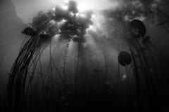 Φως του ήλιου, σκιές και μαξιλάρια κρίνων υποβρύχια στη λίμνη στοκ εικόνες