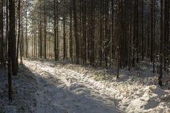 Φως του ήλιου στην πορεία Στοκ Εικόνες