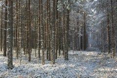Φως του ήλιου στο δάσος στοκ φωτογραφία