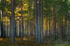 Φως του ήλιου στο δάσος στοκ φωτογραφίες με δικαίωμα ελεύθερης χρήσης