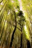 Φως του ήλιου στο άλσος μπαμπού Arashiyama, Κιότο, Ιαπωνία Στοκ εικόνες με δικαίωμα ελεύθερης χρήσης