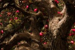 Φως του ήλιου στο δέντρο με τα λουλούδια Στοκ εικόνα με δικαίωμα ελεύθερης χρήσης