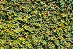 Φως του ήλιου στο πράσινο και κίτρινο υπόβαθρο φύλλων Στοκ Εικόνες