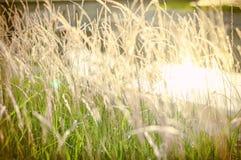 Φως του ήλιου το πρωί Στοκ Εικόνες
