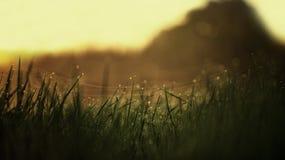 Φως του ήλιου χλόης δροσιάς πρωινού Στοκ εικόνα με δικαίωμα ελεύθερης χρήσης