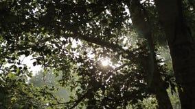 Φως του ήλιου φιλμ μικρού μήκους