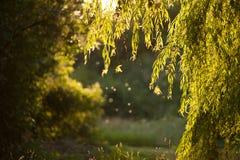 Φως του ήλιου Στοκ φωτογραφία με δικαίωμα ελεύθερης χρήσης