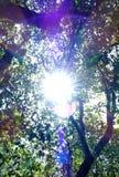 Φως του ήλιου Στοκ εικόνα με δικαίωμα ελεύθερης χρήσης