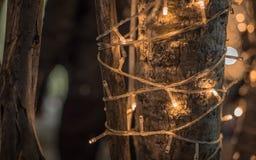 Φως των οδηγήσεων Bokeh στο δέντρο στη ημέρα των Χριστουγέννων σε Lampang Ταϊλανδός Στοκ φωτογραφία με δικαίωμα ελεύθερης χρήσης