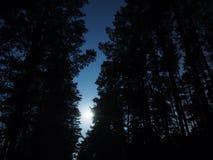 Φως φεγγαριών πέρα από το δάσος νύχτας Στοκ Εικόνες