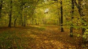 Φως φθινοπώρου στοκ φωτογραφίες με δικαίωμα ελεύθερης χρήσης