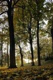 Φως φθινοπώρου Στοκ Φωτογραφία