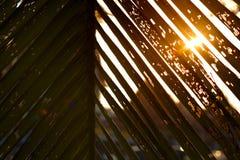 Φως φύλλων και ήλιων καρύδων σκιαγραφιών Στοκ φωτογραφία με δικαίωμα ελεύθερης χρήσης