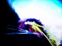 Φως Bendable στοκ εικόνα με δικαίωμα ελεύθερης χρήσης