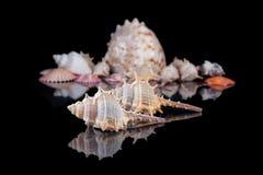 Φωτεινά ζωηρόχρωμα κοχύλια θάλασσας που ομαδοποιούνται πέρα από ένα σκοτεινό υπόβαθρο Στοκ Φωτογραφίες