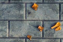 Φωτεινά κίτρινα φύλλα φθινοπώρου στα γκρίζα αντιπαραβαλλόμενα τούβλα Στοκ φωτογραφία με δικαίωμα ελεύθερης χρήσης