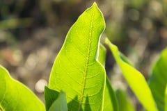 Φωτεινά κατασκευασμένα πράσινα φύλλα αναδρομικά φωτισμένα Στοκ εικόνες με δικαίωμα ελεύθερης χρήσης