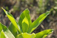 Φωτεινά κατασκευασμένα πράσινα φύλλα αναδρομικά φωτισμένα Στοκ Εικόνες
