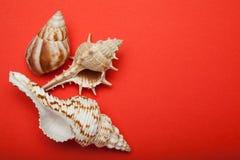 Φωτεινά κόκκινα κοχύλια υποβάθρου και θάλασσας r στοκ φωτογραφία