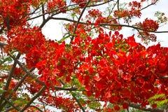 Φωτεινά κόκκινα λουλούδια Στοκ Εικόνα