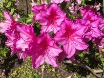 Φωτεινά ρόδινα λουλούδια στοκ εικόνες