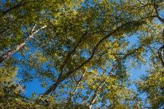 Φωτεινά δρύινα φύλλα φθινοπώρου Στοκ φωτογραφία με δικαίωμα ελεύθερης χρήσης