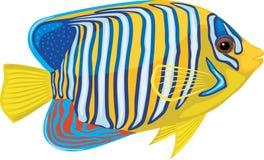 Φωτεινά τροπικά ψάρια που απομονώνονται στο άσπρο υπόβαθρο Στοκ φωτογραφία με δικαίωμα ελεύθερης χρήσης