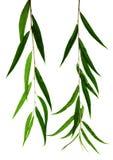φωτεινά φύλλα Στοκ φωτογραφίες με δικαίωμα ελεύθερης χρήσης