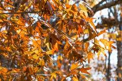 Φωτεινά φύλλα πτώσης Στοκ φωτογραφία με δικαίωμα ελεύθερης χρήσης