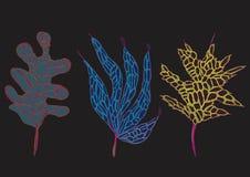 Φωτεινά φύλλα φαντασίας Στοκ Φωτογραφίες