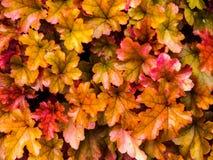 φωτεινά φύλλα Στοκ εικόνες με δικαίωμα ελεύθερης χρήσης