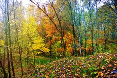 φωτεινά χρώματα φθινοπώρο&upsilo Η φύση της Μόσχας 2017 Στοκ Εικόνες